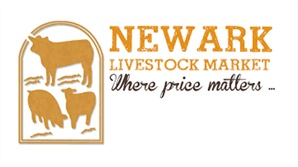 Newline launches it's NEW live auction streaming service at Newark Livestock Market